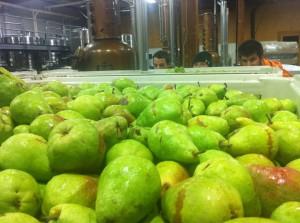 prod pears eyes